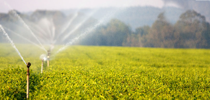 Bright-Prospects-Ahead-for-Philippine-Agribusiness.opt